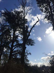 allen-stichler-pete-bowser-tree-services